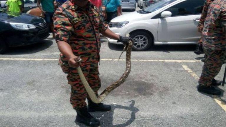 Zuakding akikoih mawtaw Bonnet sungpan Python gulkhat kimu ~ ZD
