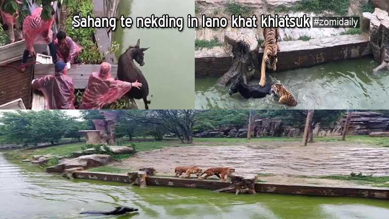 China Zoo sung sahang te omna munah lano khat ahingtang in ki khiatsuk